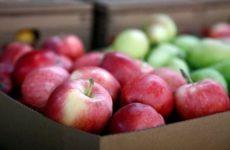 9 самых вредных для здоровья фруктов и ягод