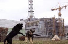 Жизнь после Припяти. Почему Чернобыль может считаться раем на Земле