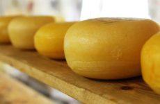 Медики сообщили о скрытых опасностях твердого сыра