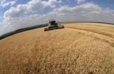На Кубани собран рекордный урожай зерна