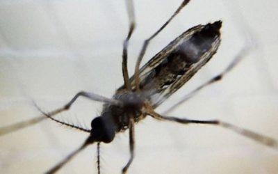 Медики озвучили опасность средства защиты от комаров