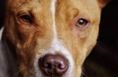 Ученые обьяснили, как собаки спасают людей от заболеваний