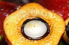 Эксперт связывает развитие онкологии с употреблением пальмового масла