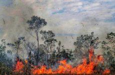 Не все лесные пожары одинаково ужасны