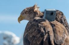 """Последствия глобального потепления показали """"глазами"""" орла Виктора"""