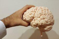 Ученые узнали, можно ли заставить мозг работать в любом возрасте