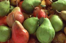 Диетолог озвучила самый полезный фрукт для кишечника
