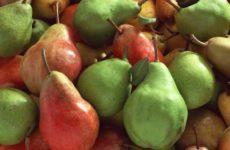 Диетологи поведали о пользе груш для кишечника