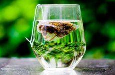 Смертоносные пирамидки: ученые поведали об опасности чая в пакетиках
