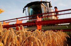 Le Figaro: американское зерно дешевеет из-за конкуренции со стороны РФ