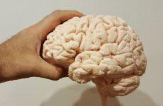 Ученые обнаружили связь между изменениями мозга и подростковым пьянством
