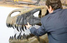 Ученые из США узнали причину вымирания динозавров