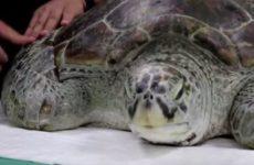 Волочкова поведала, как пережила нападение гигантской черепахи