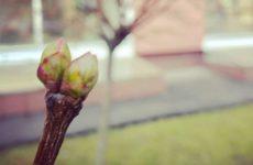 Кардиолог Конев поведал об опасности ранней весны