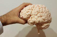 Ученые нашли способ поддержать когнитивные способности людей старше 30 лет