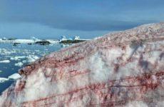 112: украинцев в Антарктиде окружил розовый снег
