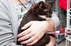 Глава Минздрава Польши считает котов вероятными носителями коронавируса