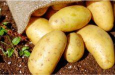 Диетолог Королева рассказала о полезных свойствах картофельного сока