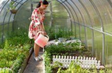 Эксперты назвали шесть самых полезных видов зелени