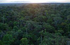 Эколог из Бразилии предупредил, что новый вирус может прийти из Амазонии