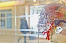 Ученый рассказал, как избежать старческого слабоумия