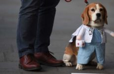 Ученые сообщили о способности собак выявлять рак и коронавирус
