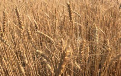 Западные СМИ негодуют из-за сокращения поставок продовольствия из РФ в Европу