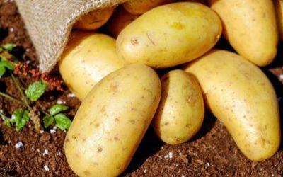 Онколог рассказала, кому противопоказан картофель