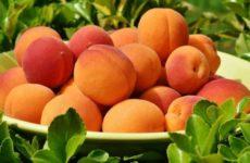 Диетолог рассказала об опасности персиков и абрикосов для некоторых людей