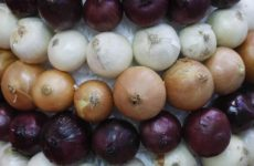 Красный лук стал причиной вспышки сальмонеллеза в Америке