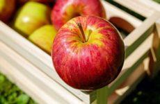 Врач объяснила негативное влияние фруктов на печень