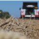 Немецкие эксперты отметили «трюк» России с зерном на фоне краха конкурентов
