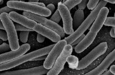 Найдено средство против смертельно опасной инфекции