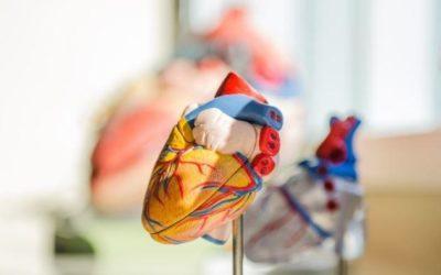 Российские ученые совершили прорыв в изучении опасной патологии сердца