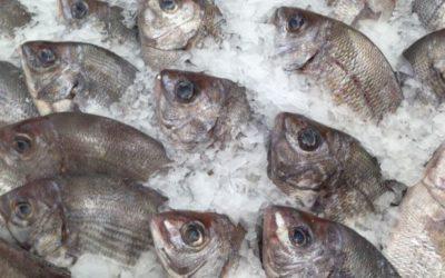 Названы девять полезных свойств рыбы для организма