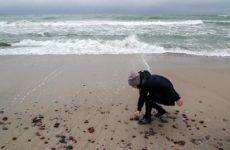 Стало известно, какое море самое отравленное и где самая ядовитая рыба