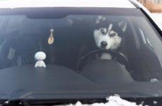 5 советов, которые пригодятся водителям зимой