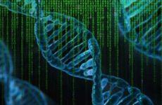 Коронавирус оказался способен встраиваться в хромосомы человека