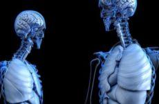 Исследователи объяснили влияние COVID-19 на головной мозг