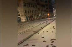В Италии прошел «дождь» из мертвых птиц
