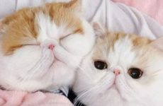 Кошачьи царапины могут спровоцировать шизофрению