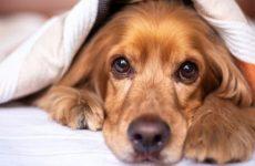Ученые из США заявили о случаях заражения детей собачьим коронавирусом