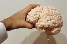 Перечислены способы привести мозг в тонус после коронавируса
